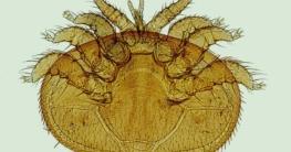 Wurm & Parasiten
